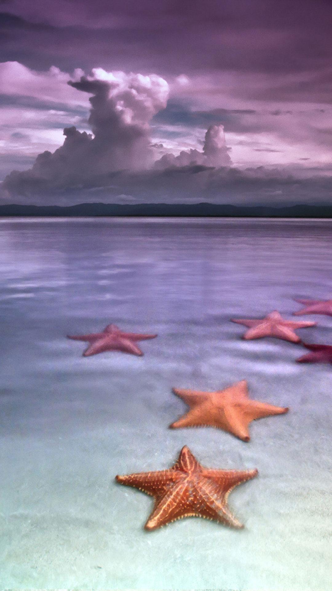 97 Koleksi Gambar Hewan Animasi Bintang Laut Gratis Terbaru