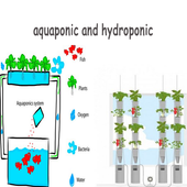 Aquaponic And Hydroponic icon