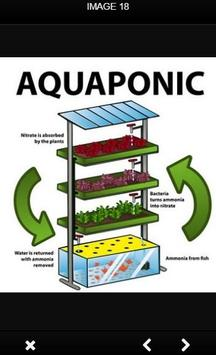 Aquaponic And Hydroponic poster