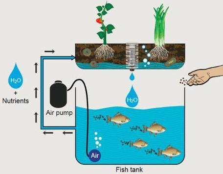 Aquaponics Gardening System screenshot 1