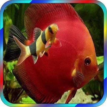 Aquarium Fish screenshot 1