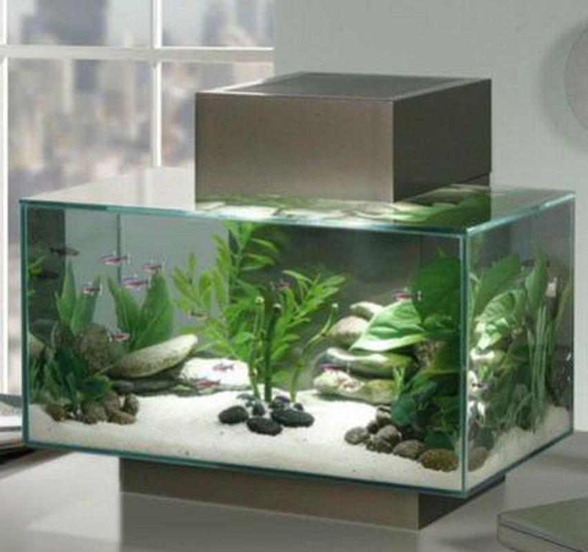 Aquarium Landschaftsbau Ideen Fur Android Apk Herunterladen