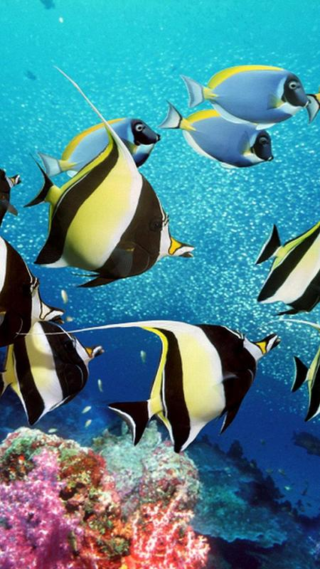 Fondos de pantalla acuario peces en movimiento for for Protectores de escritorio gratis