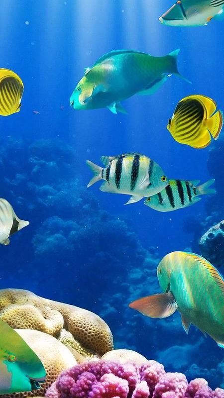 Akuarium Hidup Wallpaper 🐟 Gambar Ikan Bergerak APK Download - Gratis Personalisasi APL untuk