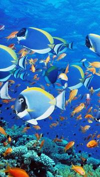 Download 660 Koleksi Wallpaper Bergerak Laut HD Gratid