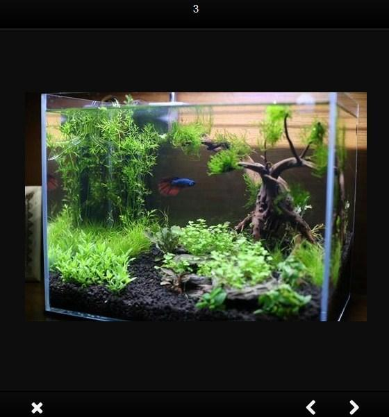 Aquarium Simple And Beautiful For Android Apk Download