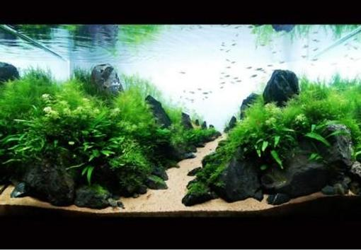 Aquascape Design Software - Aquascape Ideas