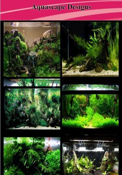Taiwanese Style Aquascape