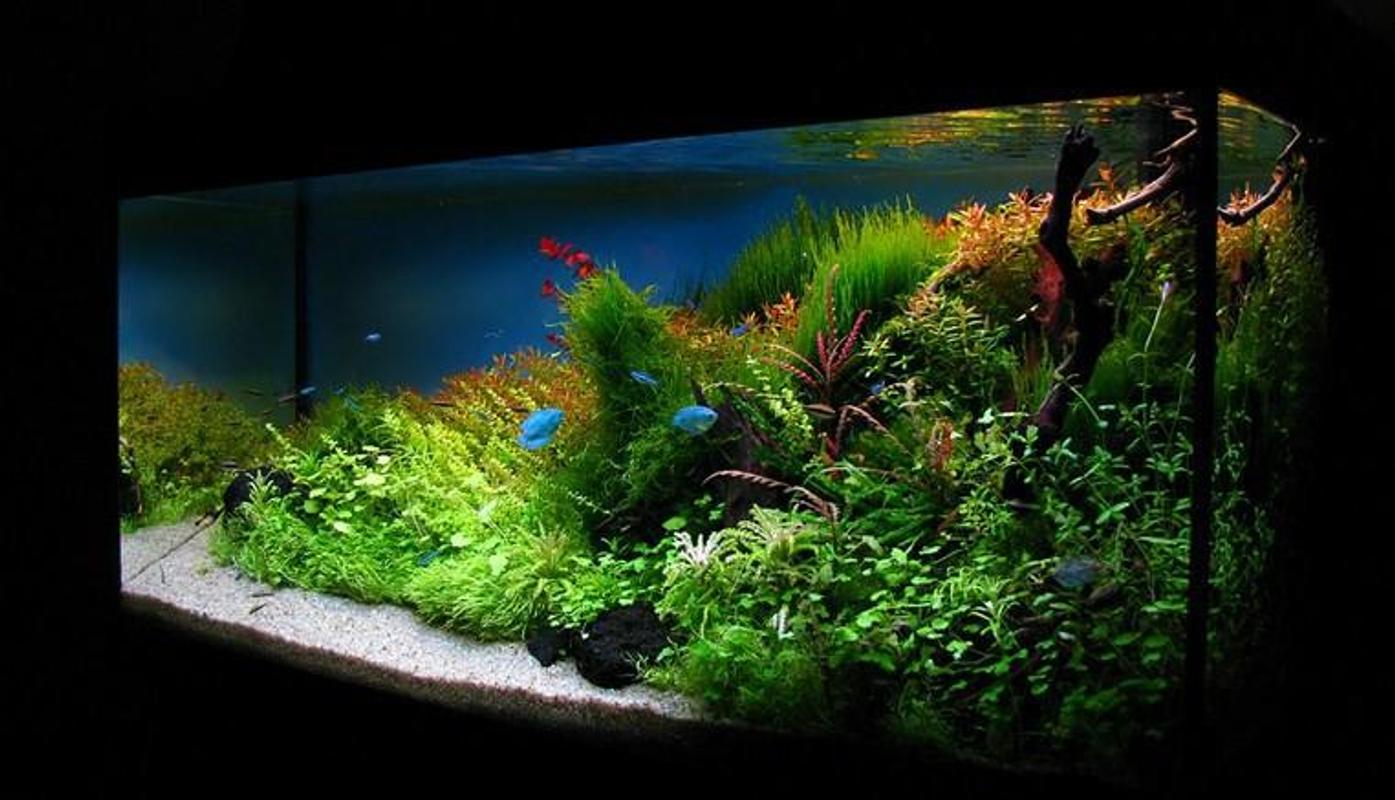 New Aquascape Design Ideas for Android - APK Download