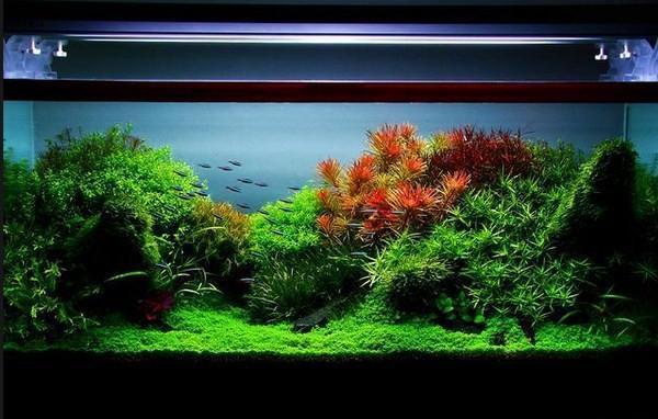 82+ Gambar Foto Desain Aquascape Terbaik Yang Bisa Anda Tiru