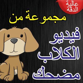 فيديو الكلاب مضحك poster