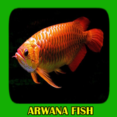 Arwana Fish Gallery icon
