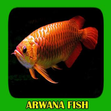 Arwana Fish Gallery screenshot 8