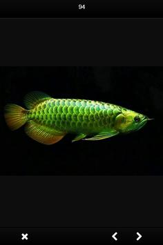Arwana Fish Gallery screenshot 2