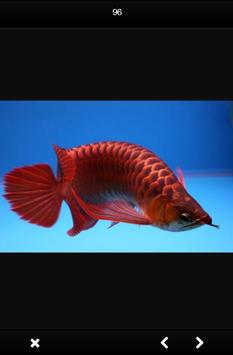 Arwana Fish Gallery screenshot 3