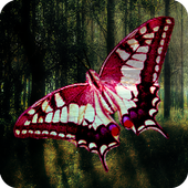 butterfly wallpaper free icon