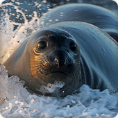 Seal Sounds icon