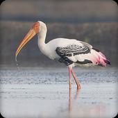 Stork Bird Call Sounds Ringtone icon