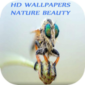 HD Wallpapers nature beauty icon