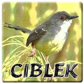 Ringtones Burung Ciblek icon