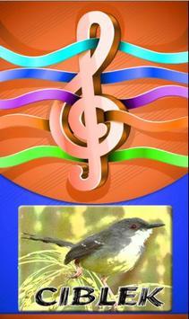 Ringtones Burung Ciblek poster