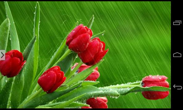 ... Beautiful Flowers Wallpapers apk screenshot ...