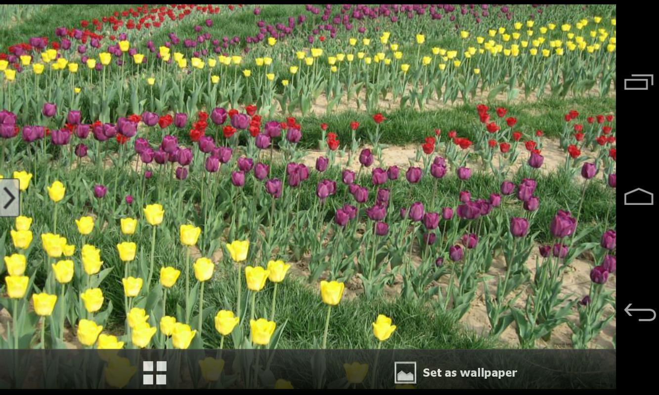 ... Beautiful Flowers Wallpapers apk screenshot ...