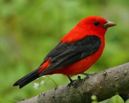 Beautiful Birds Gallery screenshot 4