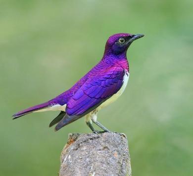 Beautiful Birds Gallery screenshot 5