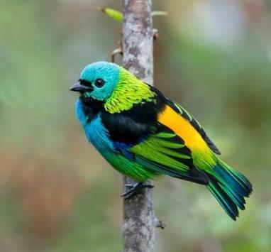 Beautiful Birds Gallery screenshot 6