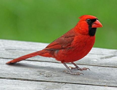 Beautiful Birds Gallery screenshot 7