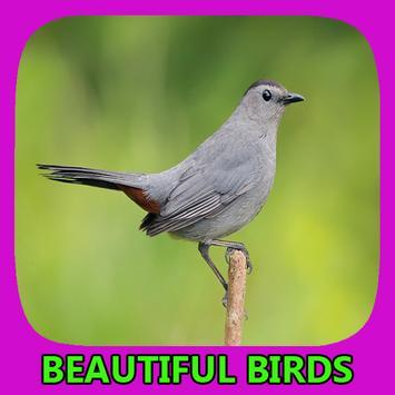 Beautiful Birds Gallery poster