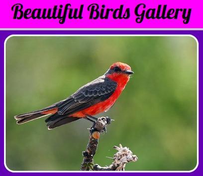 Beautiful Birds Gallery screenshot 1