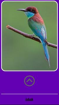 Beautiful Birds Gallery screenshot 3