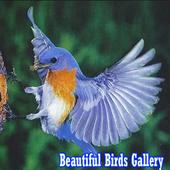 Galerio de Belaj Birdoj icon