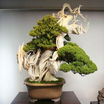 Beautiful Bonsai apk screenshot
