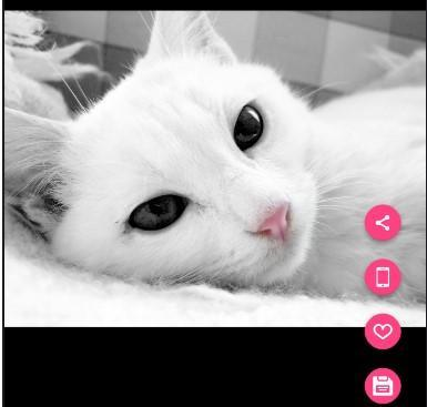 Beautiful Cute Cat Wallpaper Hd For Android Apk Download