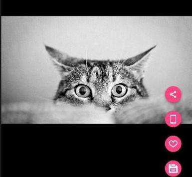 Unduh 100+  Gambar Kucing Imut Dan Lucu Hd Paling Baru HD