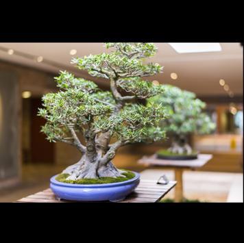 Beautifull Bonsai Design Idea screenshot 2