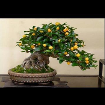 Beautifull Bonsai Design Idea screenshot 3