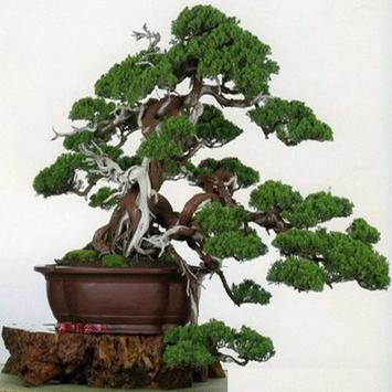 Beauty Of Bonsai apk screenshot