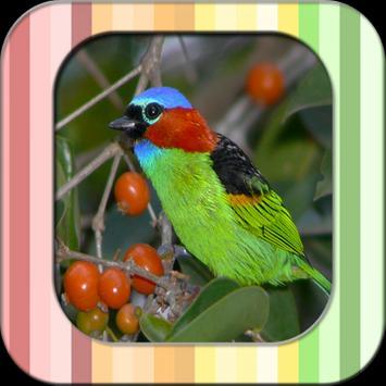 New Cantos De Pássaros Silvestres poster