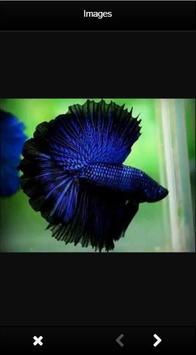 Beautiful Betta Fish poster