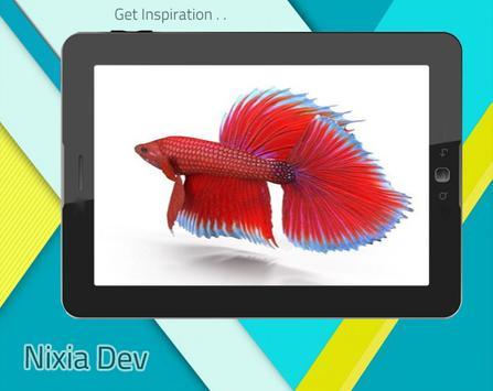 Betta Fish 3D Free screenshot 4