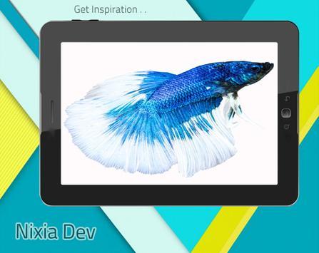 Betta Fish 3D Free screenshot 5