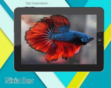 Betta Fish 3D Free apk screenshot