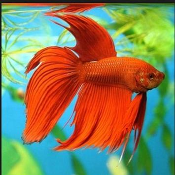 Betta fish screenshot 3