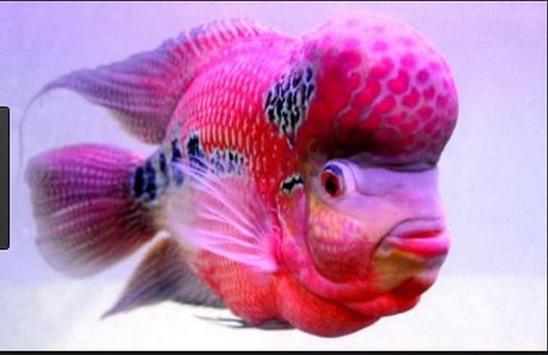 Betta fish screenshot 22