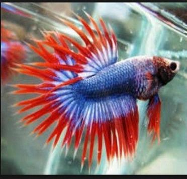 Betta fish screenshot 8
