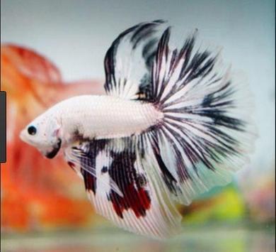 Betta fish screenshot 9